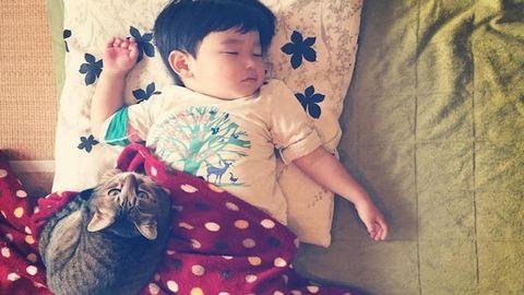 Cukiság: évek óta őrzi a kisgyerek álmát a hűséges cica
