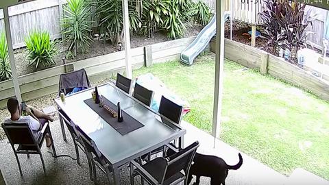 Kígyótól mentette meg gazdáját a bátor kutya – videó