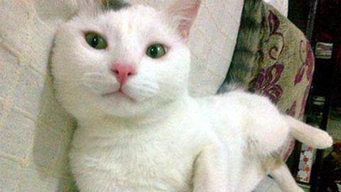 Macskája védte meg az erőszakolótól