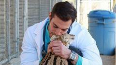 Képek, amik bizonyítják, hogy az állatorvosok csodálatosak