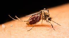 Zika-vírus: egy európai kismama is elkapta