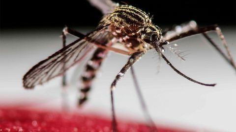 A Zika-vírus a katolikus egyházat is próbára teszi