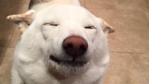 A mindig mosolygó kutyától neked is jobb kedved lesz – cuki fotók