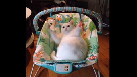 Elfoglalta a kisbaba helyét a macska – cuki videó