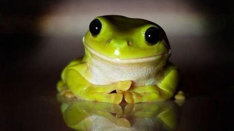 Állatok, akik neked mosolyognak - képek