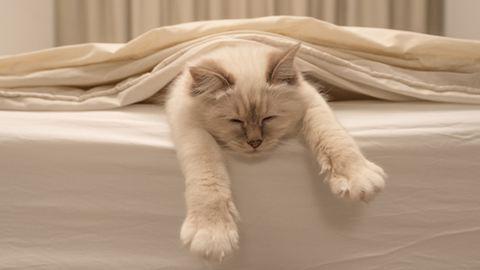 Az alvás 5 meglepő jótékony hatása