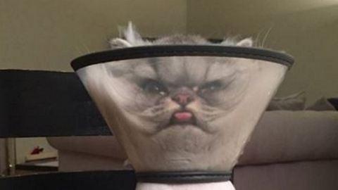 A tölcsérfejű macska a net legújabb sztárja – vicces fotó