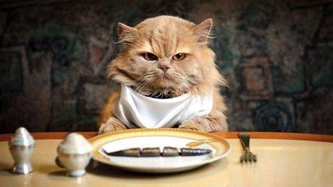 Ezért leszel könnyebben dühös, ha éhes vagy