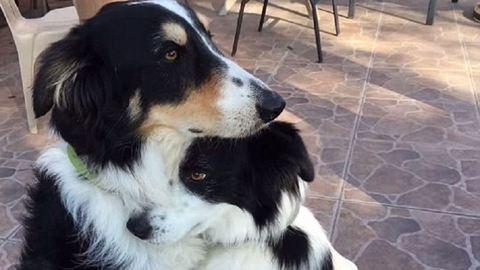 Az ölelkező kutyákat imádja most az internet – videó