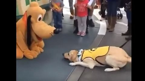 Meghajolt a Plutónak öltözött ember előtt a cuki kutya – vicces videó