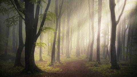 Meseszerű fotók egy misztikus erdőről