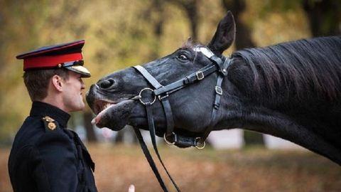 Meg tudják különböztetni a boldog és a szomorú arcot a lovak