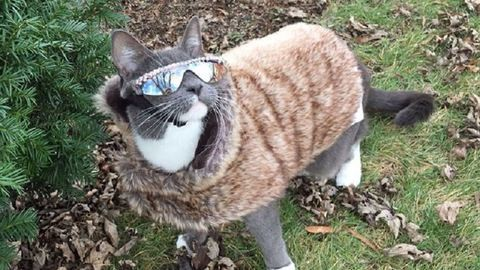 Ismerd meg a világ legkúlabb macskáját – fotók