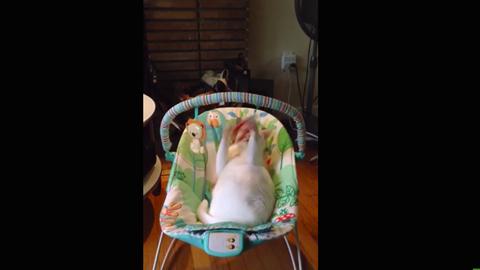 Kisbabának képzeli magát a hájas macska – vicces videó