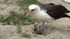 40. fiókájának adott életet a világ legöregebb madara