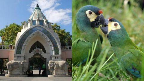 Csókért féláron látogatható az Állatkert