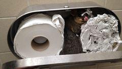 Vécépapír-tartóba szorult a cuki oposszum - fotó