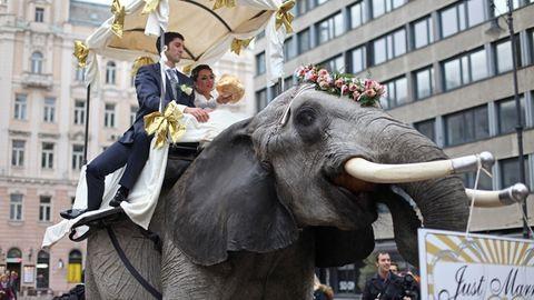 Ilyen egy igazi cirkuszi esküvő – fotók