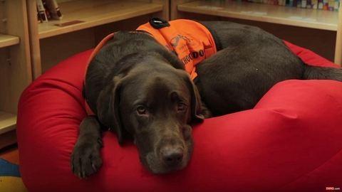 Megtanult olvasni a kutya, hogy segítsen a gyerekeknek – videó