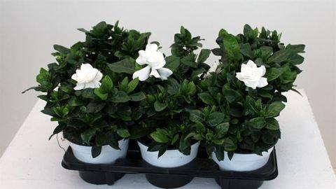 4 növény, amit érdemes a hálószobában tartani