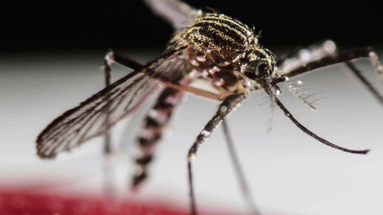 Zika-vírus: újabb bizonyíték, hogy a kór összefügg a kisfejűséggel
