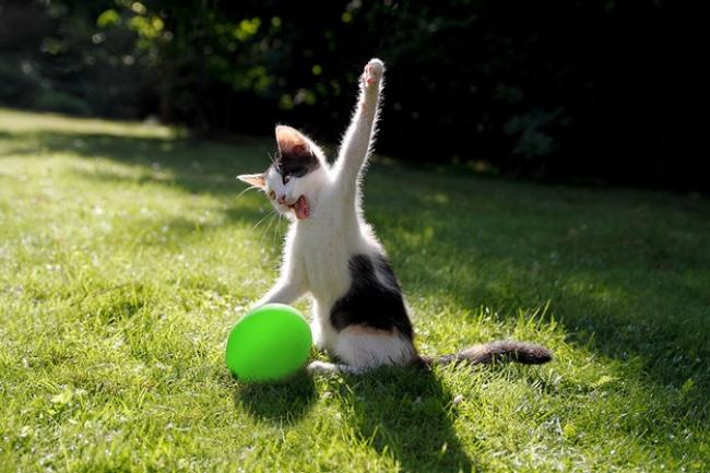 Megtaláltuk a világ legcukibb cicáit