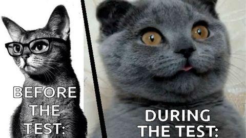 Ma van a macskák világnapja: te milyen macska lennél? Töltsd ki tesztünket!