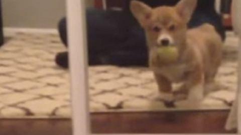 Először látja meg a tükörképét a kiskutya – vicces videó