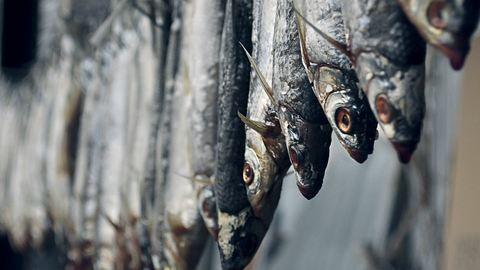 Szereted a halat? Nem mindegy, milyet vásárolsz!