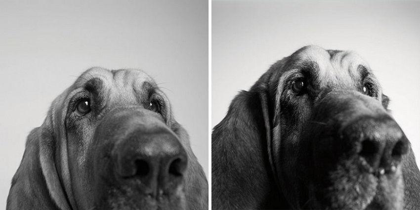 Így öregszenek a kutyák - cuki képek