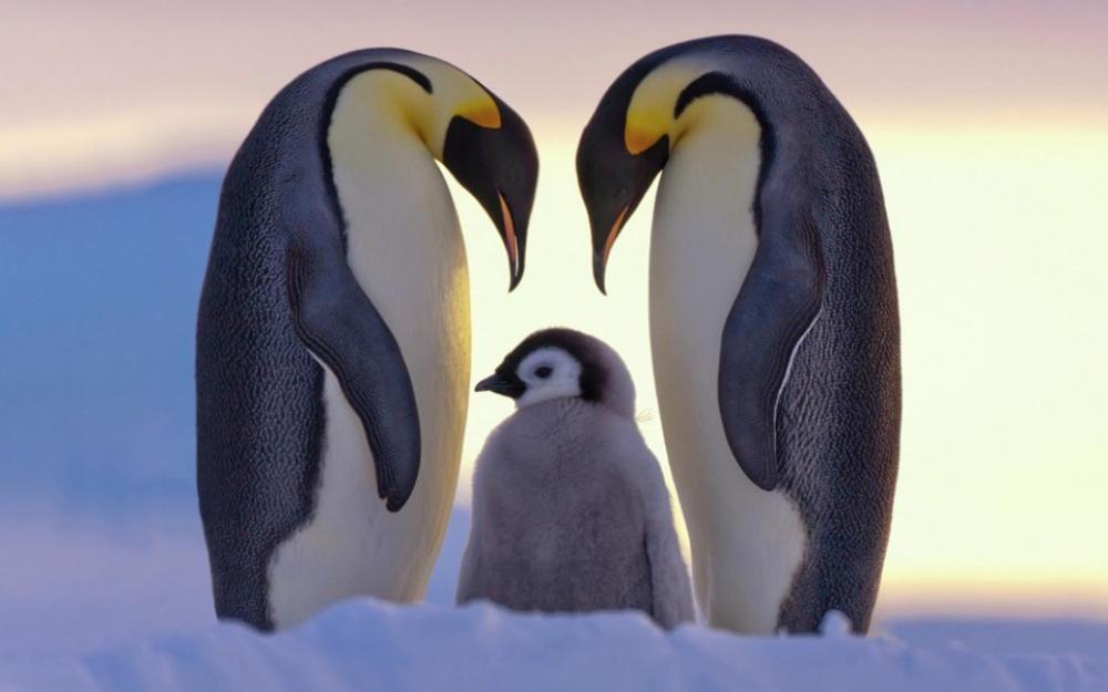 Állatok, az örök hűség szimbólumai - csodás fotók