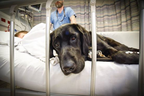 A kórházban sem tágít kis gazdája mellől a hűséges kutya - megható fotók