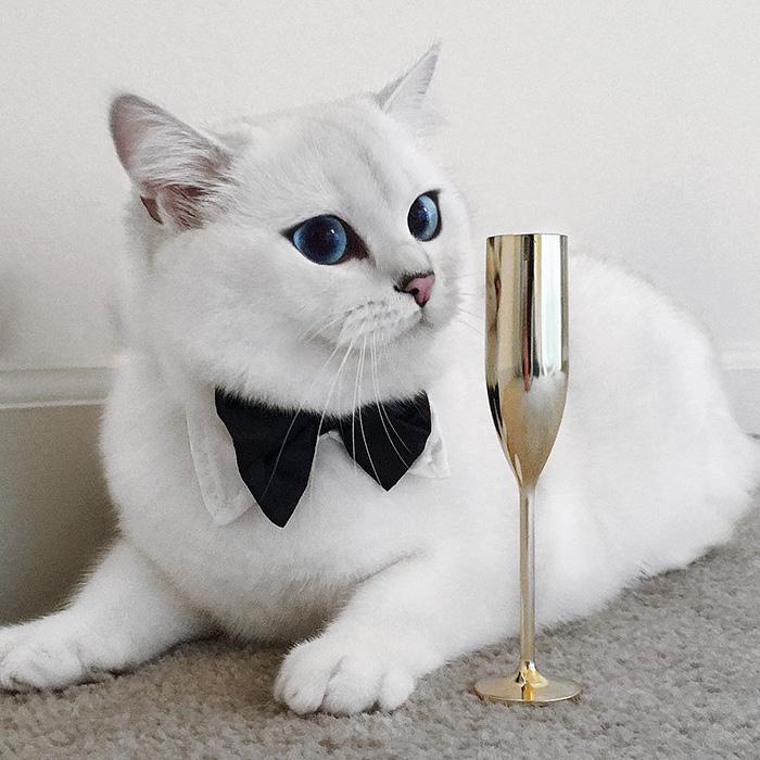 Ennek a macskának tényleg úgy csillog a szeme, mint a zafír