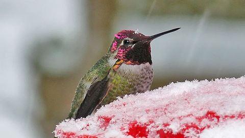 Hajszárítóval mentette meg a kolibrit