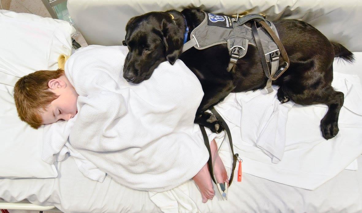 A kórházban sem mozdul a kisfiú mellől négylábú segítője