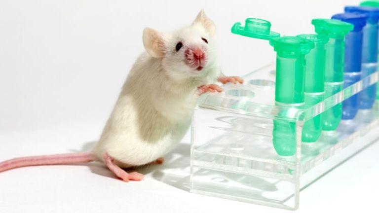 Az egereknél fényesen bevált a trehalóz