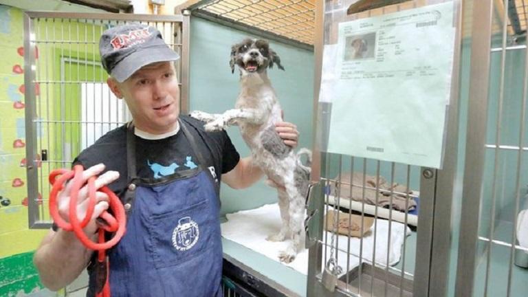 Ingyen kutyakozmetika menhelyi kutyáknak - képek