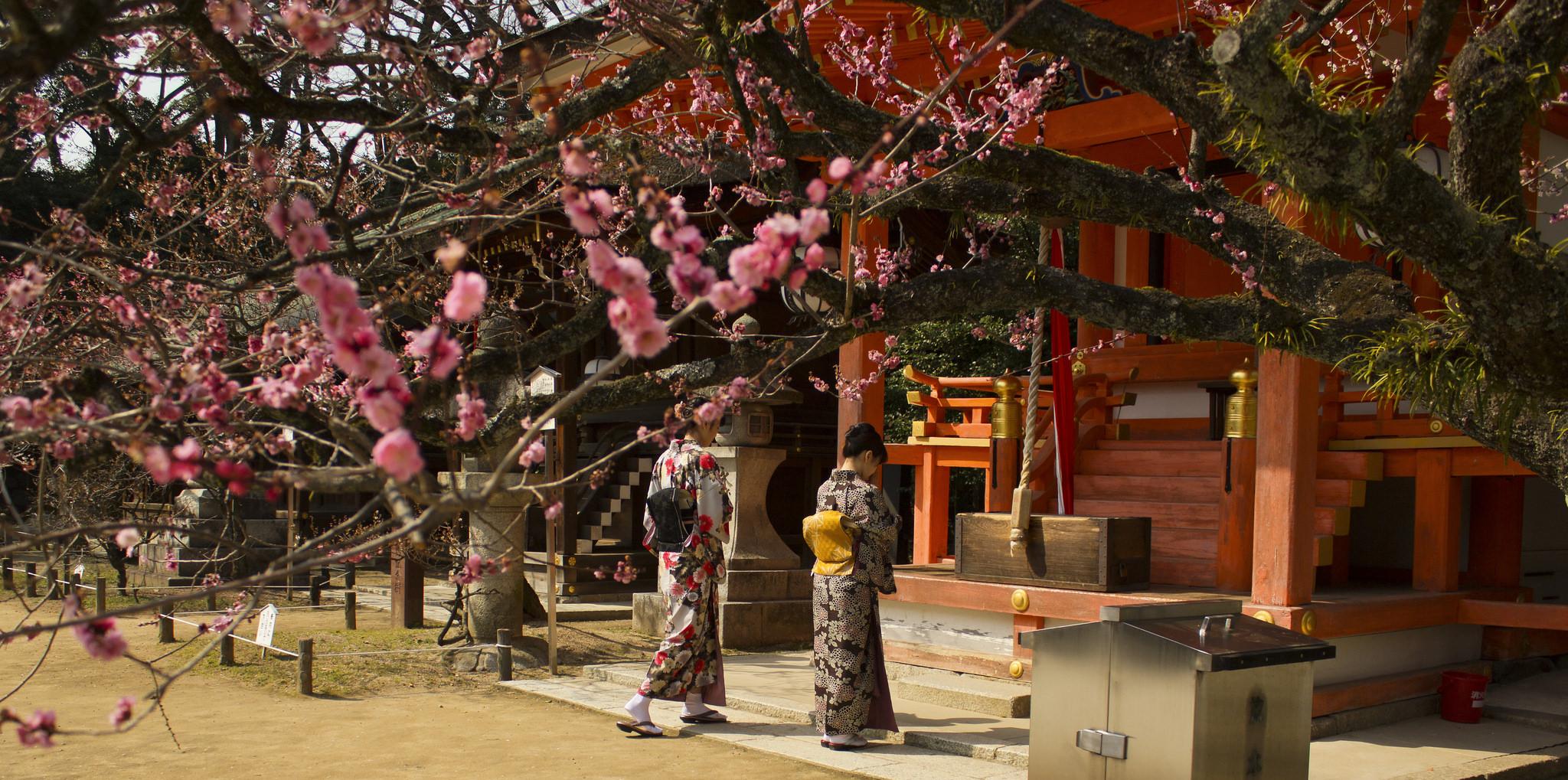 Gyönyörűen a virágzó szilvafák - mesés képek Japánból