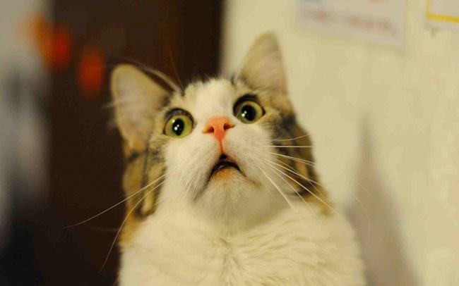 Macskák, akik olyan arcot vágnak, mint mi a munkahelyeken