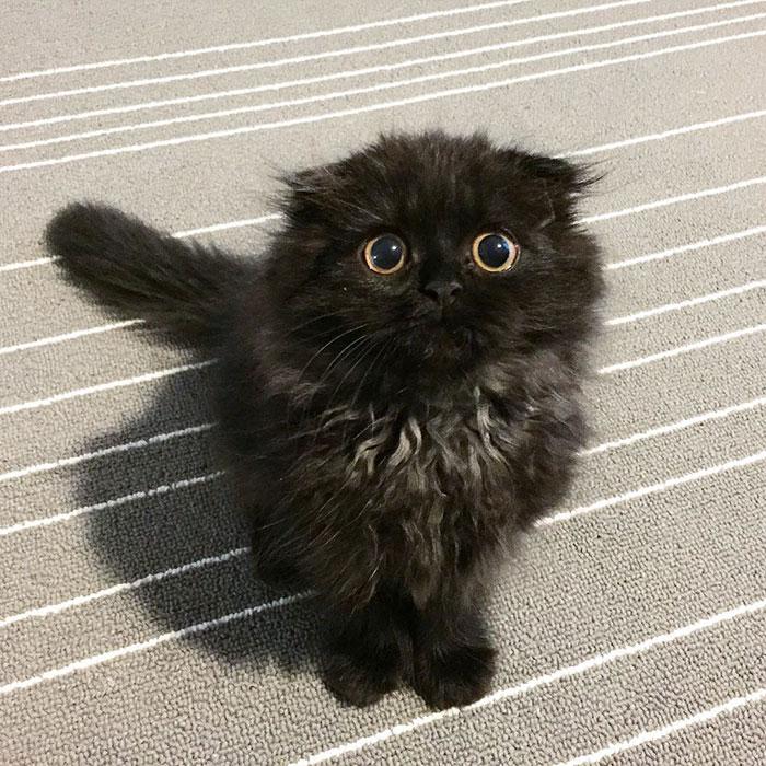Napi cuki: hatalmas szemei vannak a szőrmók cicának
