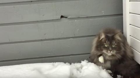 Ez a macska teljesen odavan a hóért – cuki videó