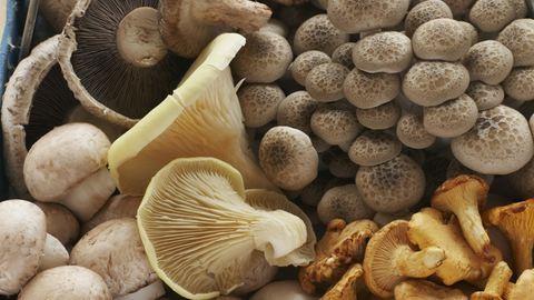 Egyszerűbben értékesíthetők a vadon gyűjtött termények