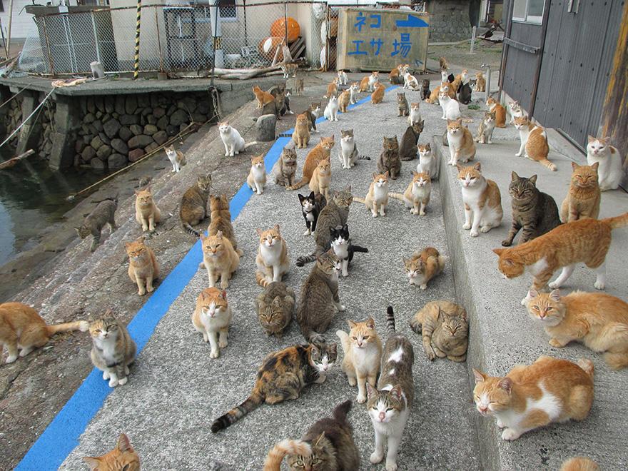 Az internettől kért ételt a japán macskasziget - és kapott