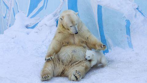 Így mókázik bocsával a jegesmedvemama – cuki fotók