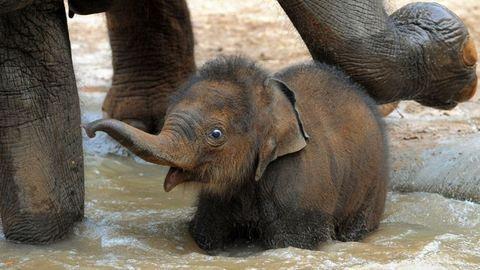 Miért nem rákosak az elefántok?