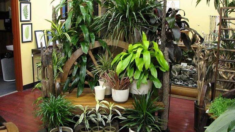 A sok növény fokozza az otthonosságot