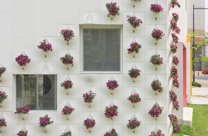 Gyönyörködj te is a házfalból sarjadó virágokban