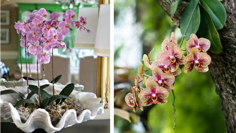 Így gondozd az orchideát – a 4 legfontosabb szabály