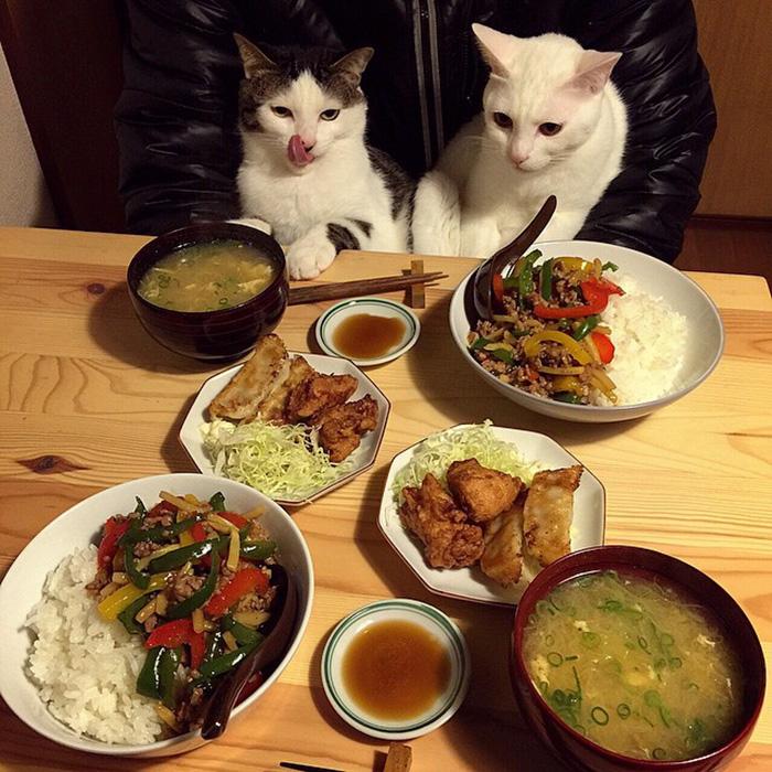 Ők a legcukibb gasztromániás cicák