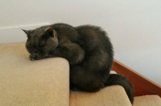 Állatok, akik igazán extrém helyeken aludtak el - vicces képek